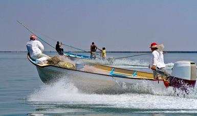 Inicia temporada 2020 de captura de camarón de altamar en el Pacífico mexicano