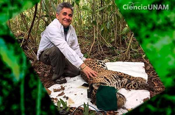 Aún es posible frenar la extinción de especies