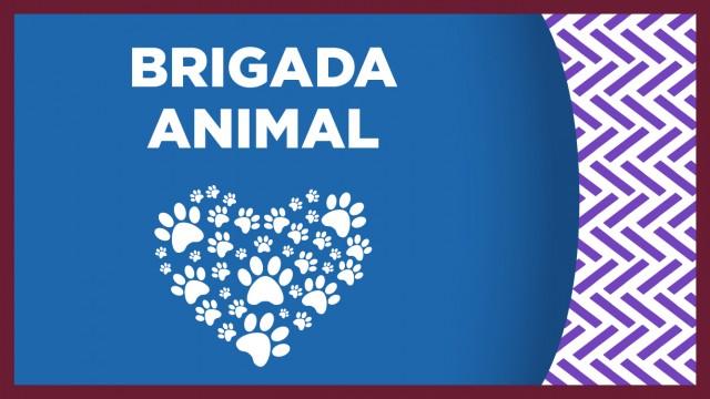 Animalitos de compañía de la Brigada de Vigilancia Animal de la SSC, recibieron una donación de alimentos