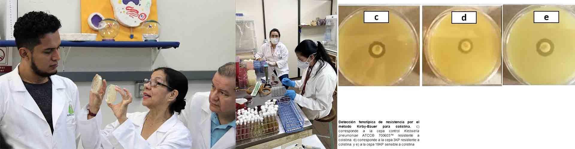Detectan especialistas del IPN bacterias difíciles de combatir en hospitales