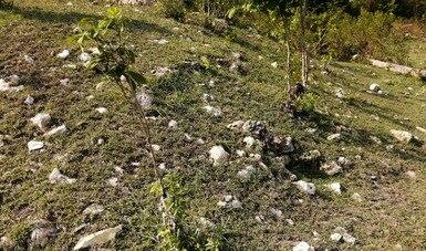 Con el empleo de tecnología LiDAR y prospección en campo, se registran áreas con monumentos arqueológicos en  Candelaria, Campeche