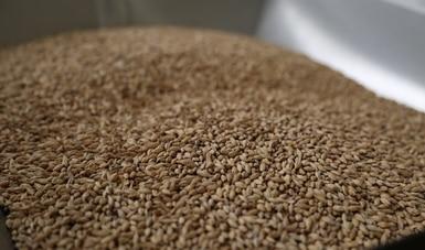Aumenta superávit agroalimentario 30.91 % a agosto