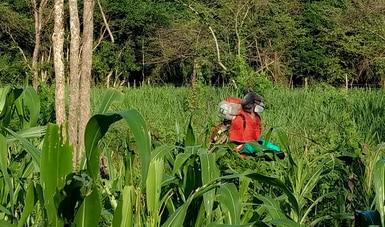Acuerdan México, Estados Unidos y Canadá fortalecer trabajo conjunto para regular uso de plaguicidas agrícolas