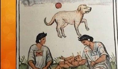 Analizan la presencia del perro mexicano durante el virreinato de la Nueva España