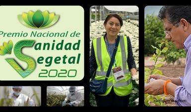 Elige jurado calificador a ganadores del Premio Nacional de Sanidad Vegetal 2020