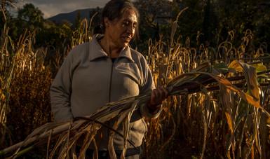 Pone en marcha Gobierno de México el Programa Especial Concurrente para el Desarrollo Rural Sustentable 2020-2024