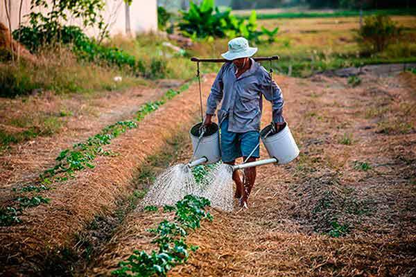 Los sistemas de producción agrícola requieren pronta transformación