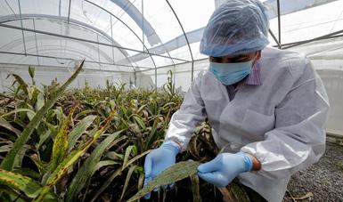 México, referencia en materia de control biológico contra plagas, una alternativa al uso de sustancias químicas