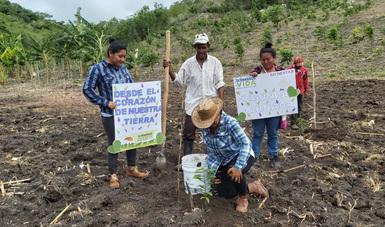 Segunda Jornada Nacional de Siembra enriquece Campeche con casi 28 millones de plantas