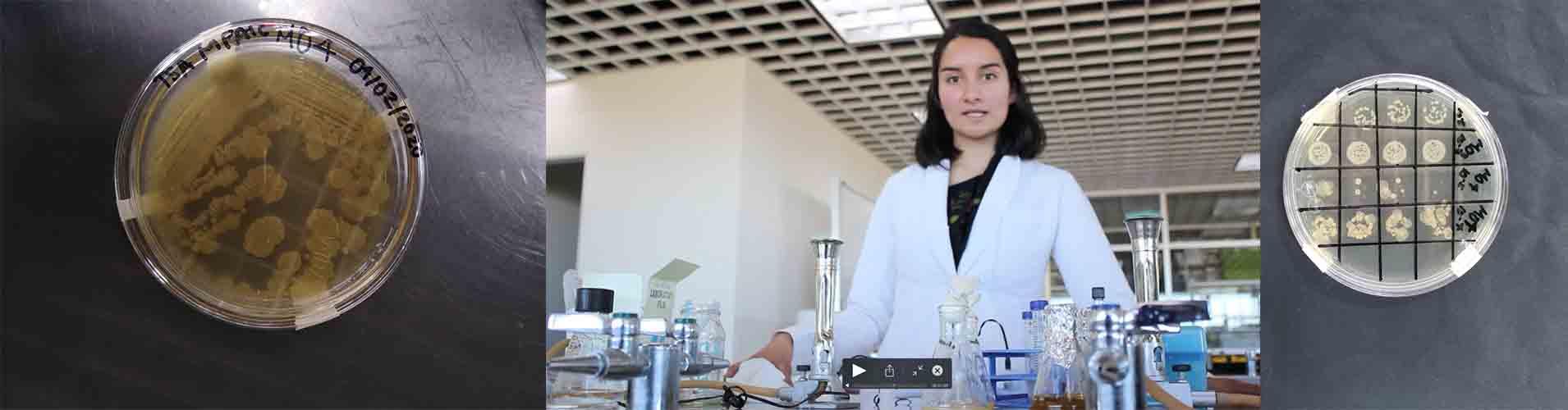 Alumna politécnica emplea microorganismos para remediación ambiental