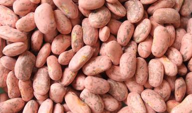 Reciben oficinas de Agricultura en Zacatecas solicitudes para adquirir semilla certificada de frijol