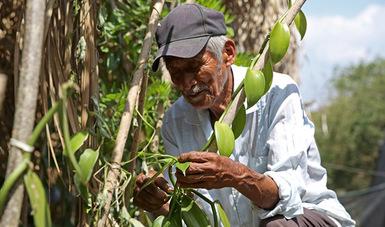 Paga Bienestar mes de junio a sembradoras y sembradores; la inversión social es de mil 879 mdp