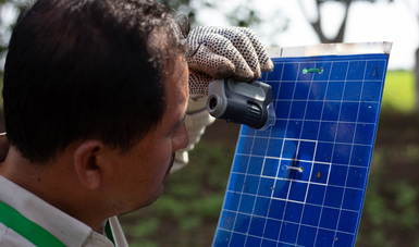 Declara Agricultura a Baja California, Chihuahua, Coahuila, Durango y Sonora como zonas libres de plagas del algodonero