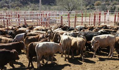 Acuerdan México y Estados Unidos protocolo para movilización de ganado de alto registro certificado