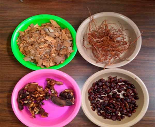 Con materiales a partir de semillas de tamarindo buscan reducir uso de plásticos