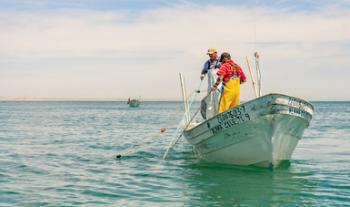 Anuncia Agricultura inicio de temporada de capturas de diversas especies marinas a partir del 1 de agosto