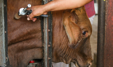 Capacita Agricultura a más de dos mil médicos veterinarios para identificar enfermedades exóticas de los animales