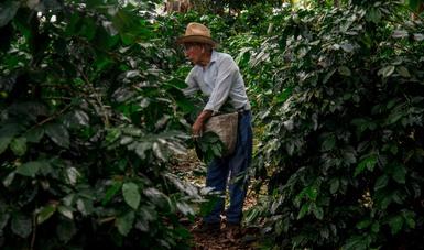 México, EEUU y Canadá intercambian información para enfrentar efectos del cambio climático en la agricultura
