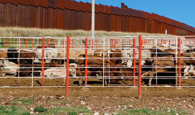 Entra en vigor acuerdo de movilización de ganado de alto registro entre México y Estados Unidos