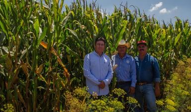 De 97.9%, el avance de pago de apoyos a productores de granos beneficiarios de Producción para el Bienestar
