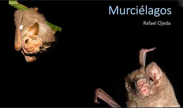 Somos inocentes: los murciélagos