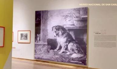 La historia que nos une. Animales de compañía en el arte, exposición en el Museo Nacional de San Carlos
