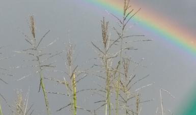 Desarrollan Agricultura, Conaza y Colpos proyecto para el cultivo de pasto forrajero en zonas áridas del país