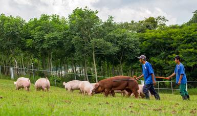 Apoyo a productores de pequeña y mediana escala, factor para fomentar al sector agroalimentario en contexto de pandemia: Agricultura