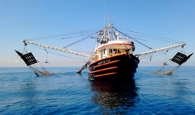 Anuncia Agricultura levantamiento de veda para la pesca de camarón en el océano Pacífico