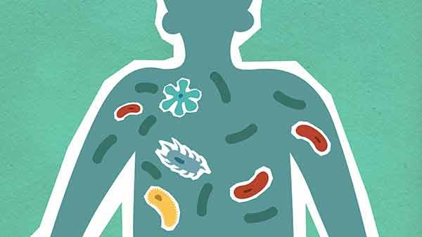 Consumo excesivo de antibióticos altera la microbiota del organismo