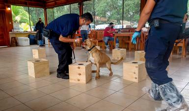 Colabora México con esfuerzo regional para erradicar al caracol gigante africano de Centroamérica