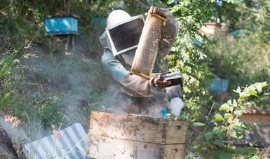 Presenta México sus avances para contribuir a los Objetivos del Desarrollo Sostenible desde la perspectiva del sector agroalimentario