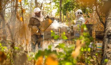Producción para el Bienestar entrega apoyos directos a los 22 municipios de La Montaña; 282 por ciento más respecto a 2018