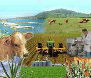 Necesario, nuevo sistema financiero rural
