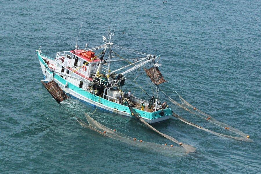 Registra producción pesquera y acuícola nacional avance de un millón 075 mil tons a septiembre de 2015