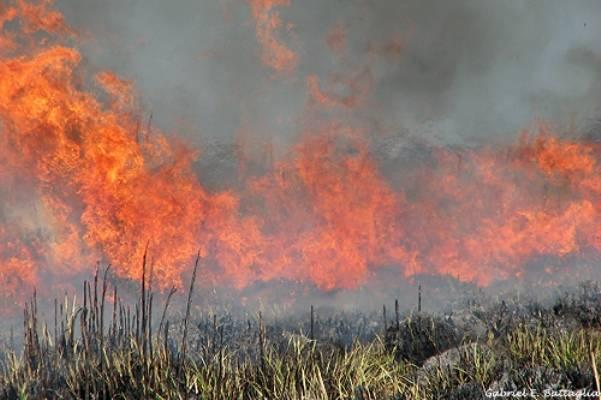 Incrementan sanciones a quien realice actividades en ecosistemas dañados por incendios