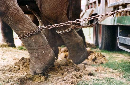 Fortalecer protección de los animales