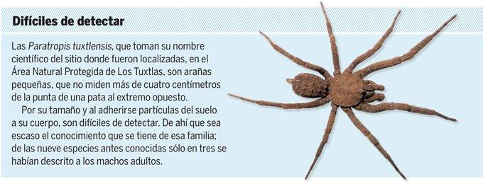 Científicos de Biología de la UNAM descubren nueva especie de araña en México