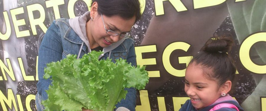 Impulsan en la CDMX seguridad alimentaria con agricultura urbana