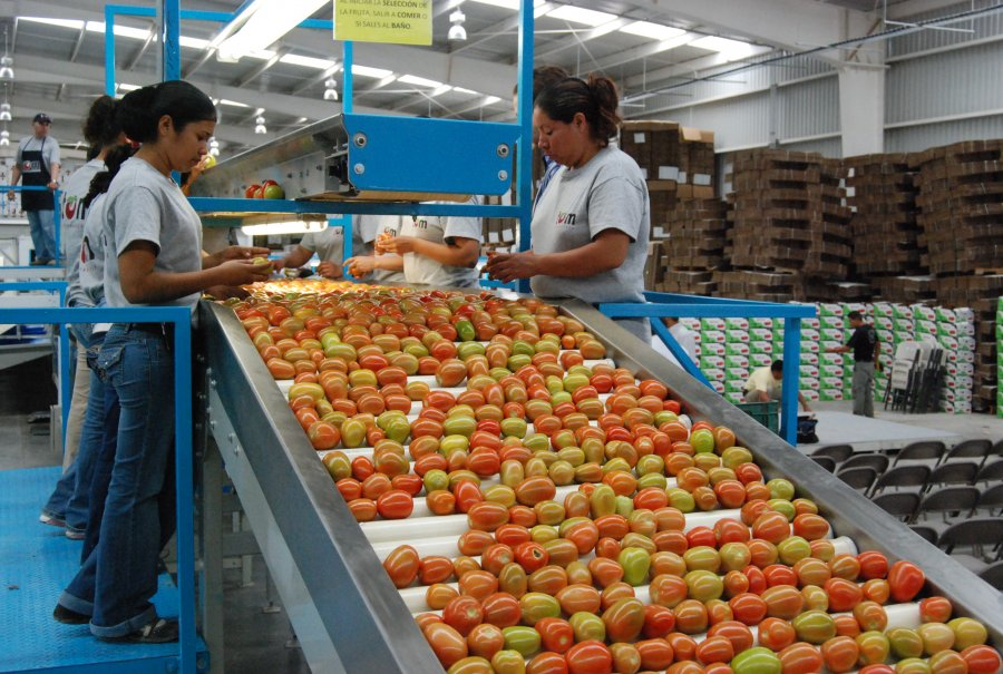 Sector primario, el de mayor crecimiento durante el tercer trimestre del año