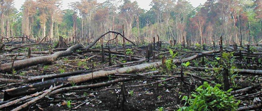 Senado llama a incluir a comunidades indígenas de Guerrero, en combate a la tala ilegal