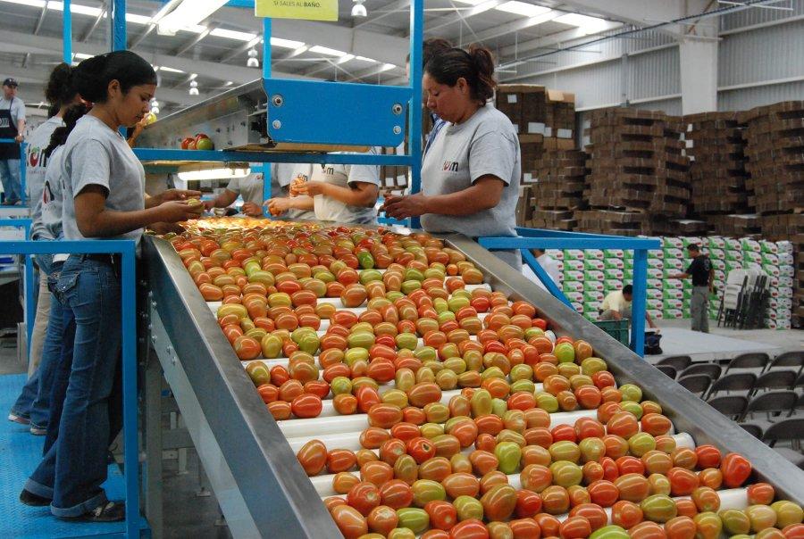 Mantienen exportaciones agroalimentarias tendencia a la alza