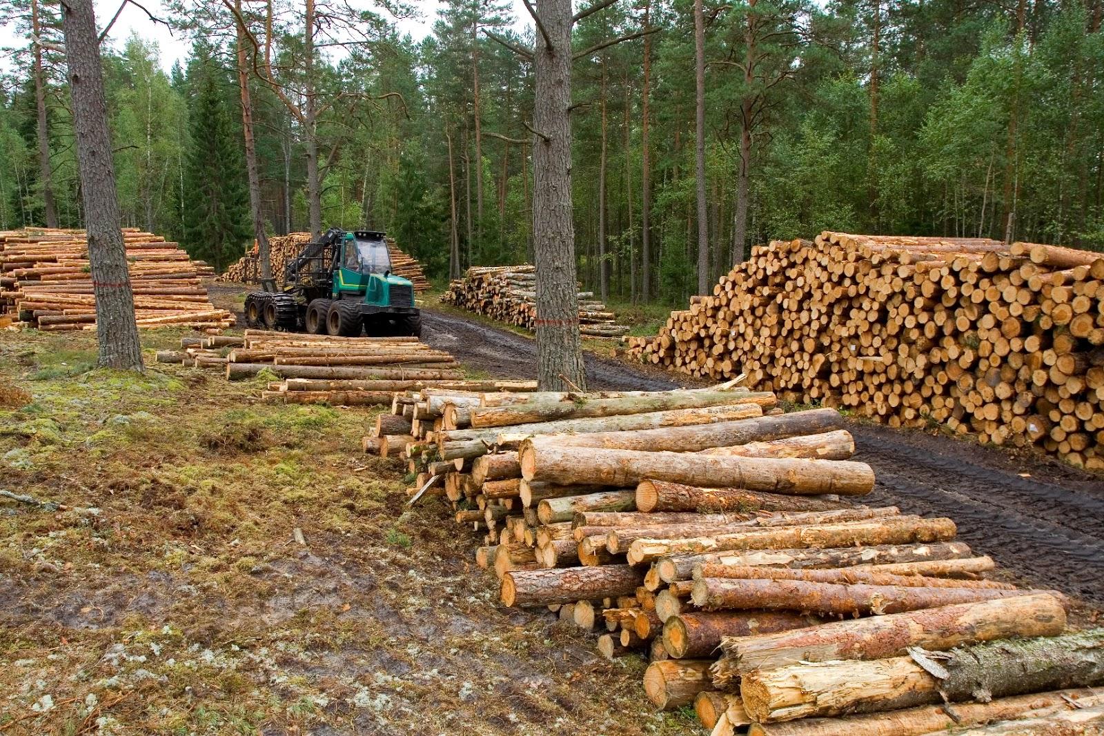 Propone PVEM en Senado reforma para combatir tala y deforestación
