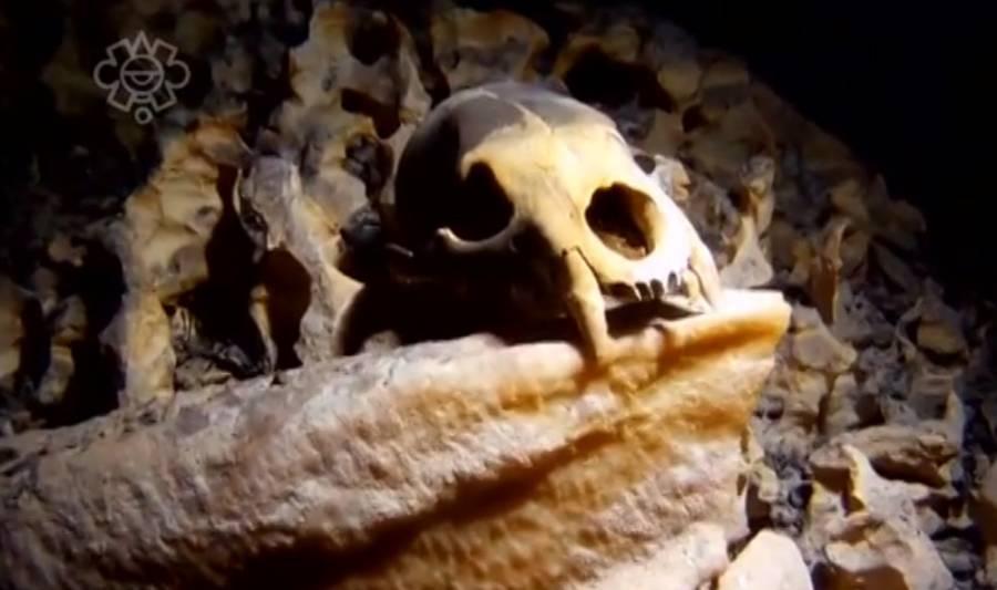 Encuentran en Hoyo Negro el patrimonio más antiguo de nuestro continente