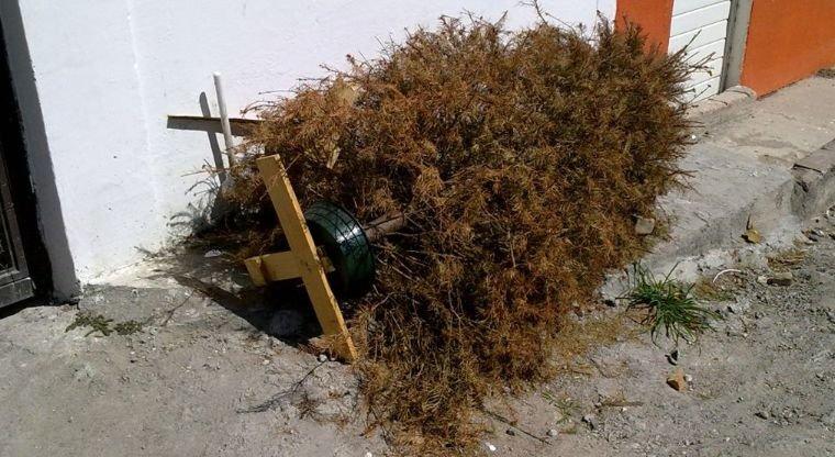 Necesario aplicar sanciones para quienes abandonen o quemen árboles navideños