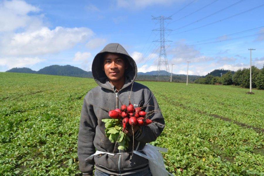 Capacitará SEDEREC a campesinos para mejorar técnicas de cultivo