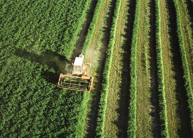 A cien años de Ley Agraria persiste explotación de trabajadores del campo